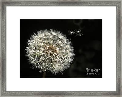 Make A Wish Framed Print by Jan Bickerton