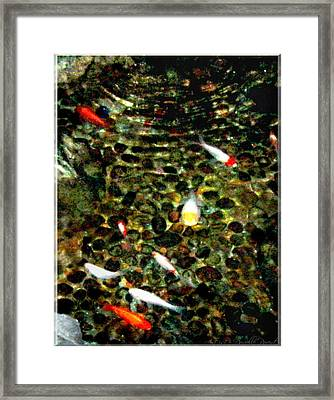 Make A Wish Koi Fishes Framed Print by Danielle  Parent