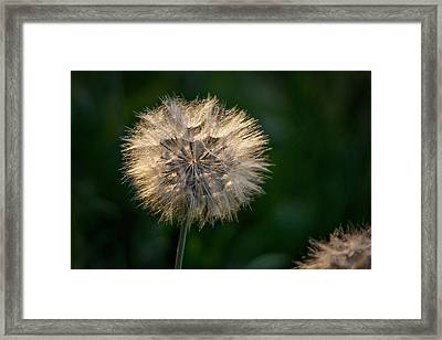 Make A Wish Framed Print by Linda Storm
