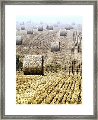 Make Hay While The Sun Shines  Framed Print by Heiko Koehrer-Wagner