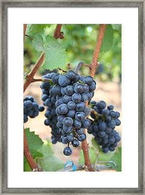 Make Me Wine Framed Print