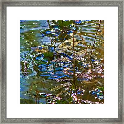 Framed Print featuring the photograph Making A Deposit For The Future by Gary Holmes