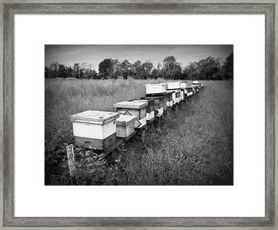 Making Honey II Bw Framed Print
