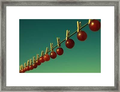 Making Raisins. Framed Print by Beata  Czyzowska Young