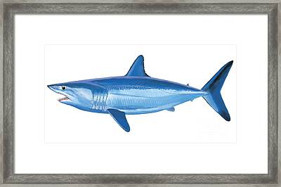 Mako Shark Framed Print by Carey Chen