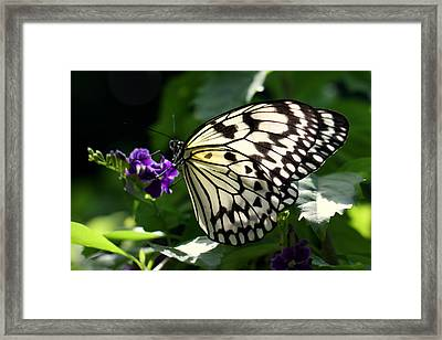 Framed Print featuring the photograph Malabar Tree Nymph  by Suzanne Stout