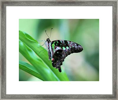 Malachite Butterfly Framed Print
