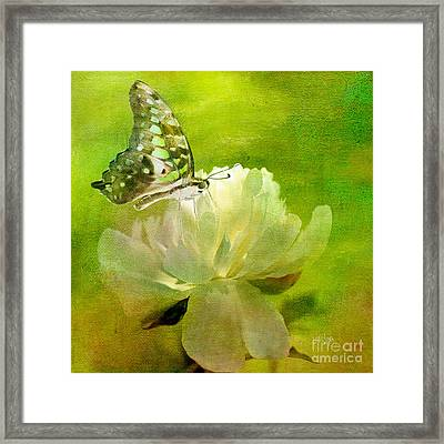 Malachite On Peony Framed Print by Lois Bryan
