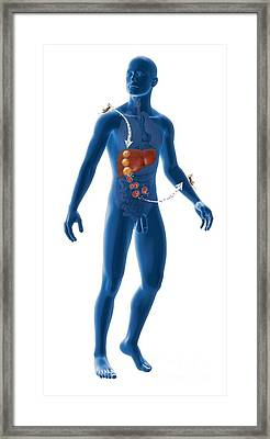 Malaria Infection Cycle, Artwork Framed Print