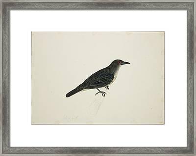 Malay Glossy Starling Framed Print