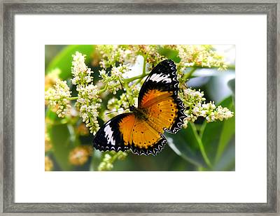 Malay Lacewing Butterfly  Framed Print by Saija  Lehtonen