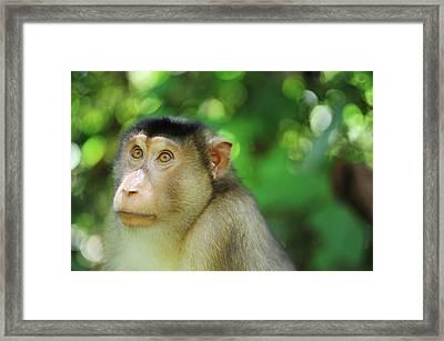 Malaysia, Borneo, Sepilok, Close Framed Print