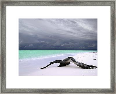 Maldives 02 Framed Print by Giorgio Darrigo