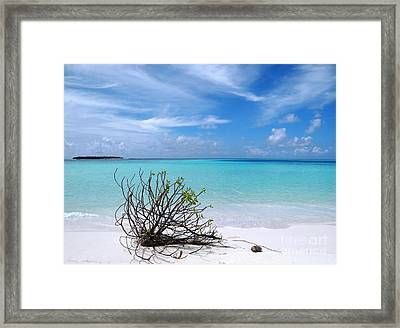 Maldives 12 Framed Print by Giorgio Darrigo