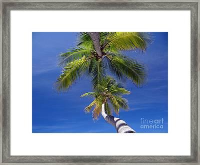 Maldivian 10 Framed Print by Giorgio Darrigo