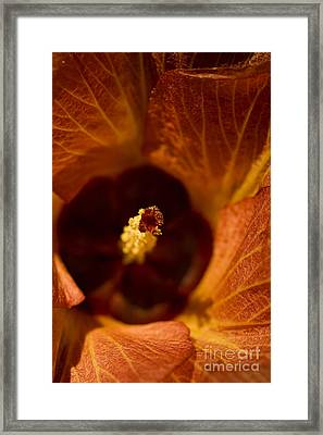 Maldivian Flower Framed Print by Dee Cresswell