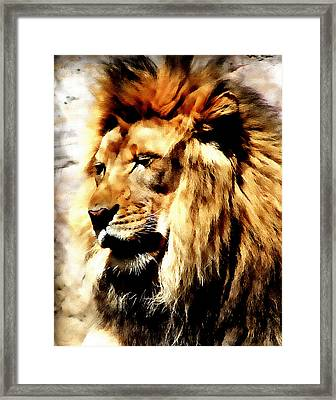 Male African Lion Framed Print by Jennifer Muller