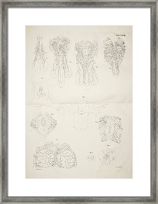 Male And Female Reproductive Organs Framed Print by British Library