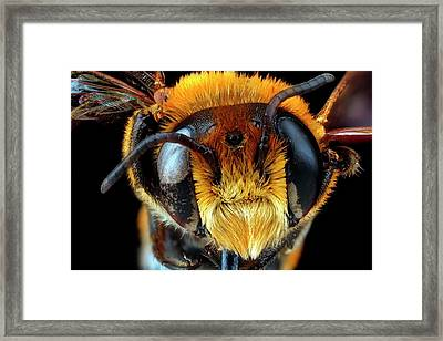 Male Bee Head Framed Print by Us Geological Survey