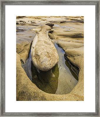 Male Erosion Dysfunction Framed Print by Scott Campbell