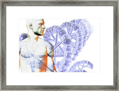 Male Figure With Dna Framed Print by Carol & Mike Werner
