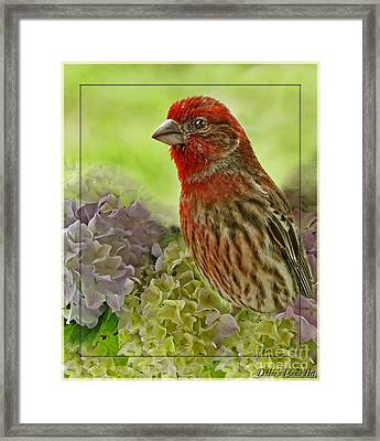 Framed Print featuring the photograph Male Finch In Hydrangesa by Debbie Portwood