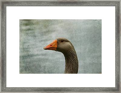 Male Graylag Goose Profile Framed Print