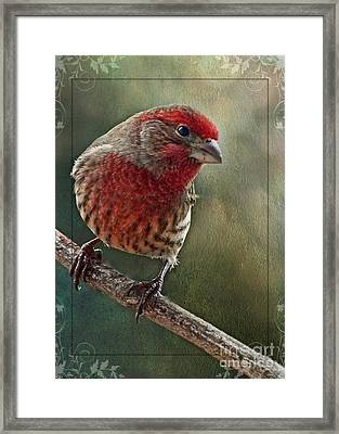 Male Housefinch With Green Texture And Decorations Framed Print by Debbie Portwood