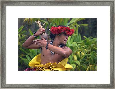 Male Hula Dancer With Small Gourd Instrument Framed Print by Lori Seaman