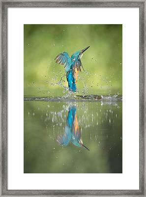 Male Kingfisher Framed Print by Andy Astbury