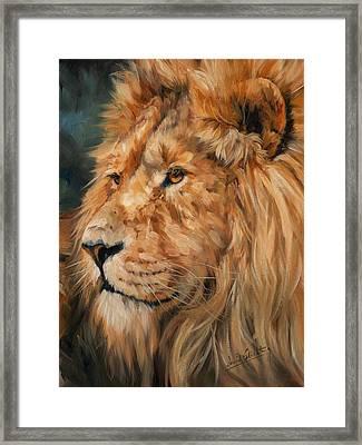 Male Lion Framed Print by David Stribbling