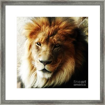 Male Lion Face Close Up Framed Print