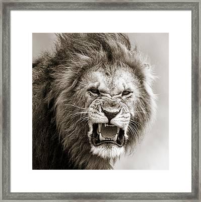 Male Lion I Masai Mara Kenya Framed Print by Regina Mueller