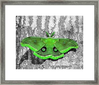Male Moth Green Framed Print by Al Powell Photography USA