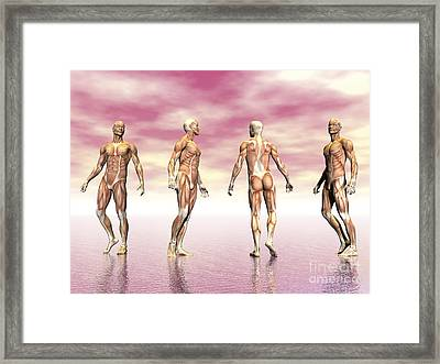 Male Muscular System From Four Points Framed Print