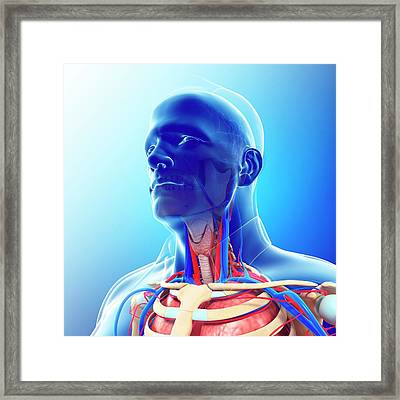 Male Neck Blood Vessels Framed Print by Pixologicstudio/science Photo Library