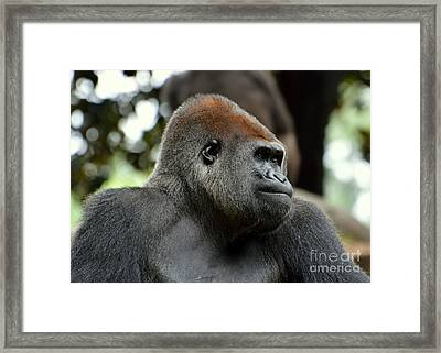 Framed Print featuring the photograph Male Silverback by Lisa L Silva