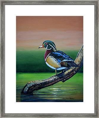 Male Wood Duck Framed Print by Mary ann Blosser