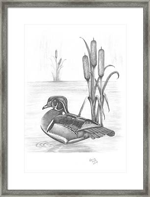 Male Wood Duck Framed Print by Patricia Hiltz