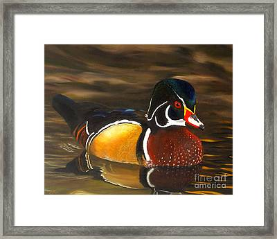 Male Wood Duck Portrait Framed Print by Jane Axman