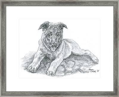 Malinois Pup Framed Print