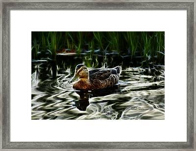 Mallard - 2043 - F Framed Print by James Ahn