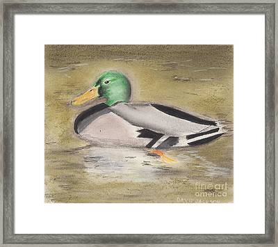 Framed Print featuring the pastel Mallard by David Jackson