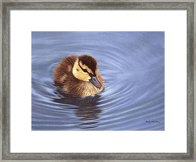 Mallard Duckling Painting Framed Print by Rachel Stribbling