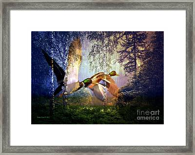 Mallard Ducks Flying To The Lake Framed Print