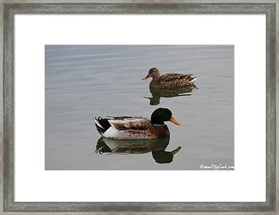 Framed Print featuring the photograph Mallard Ducks Reflecting by Robert Banach