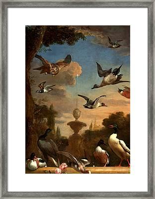 Mallard Golden Eagle Wild Fowl In Flight Framed Print