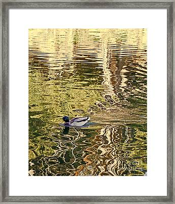 Framed Print featuring the photograph Mallard Painting by Kate Brown