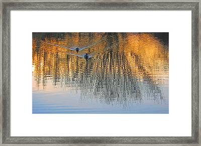Mallard Pair At Kah Tai Lagoon Framed Print