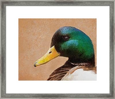 Mallard Portrait Framed Print